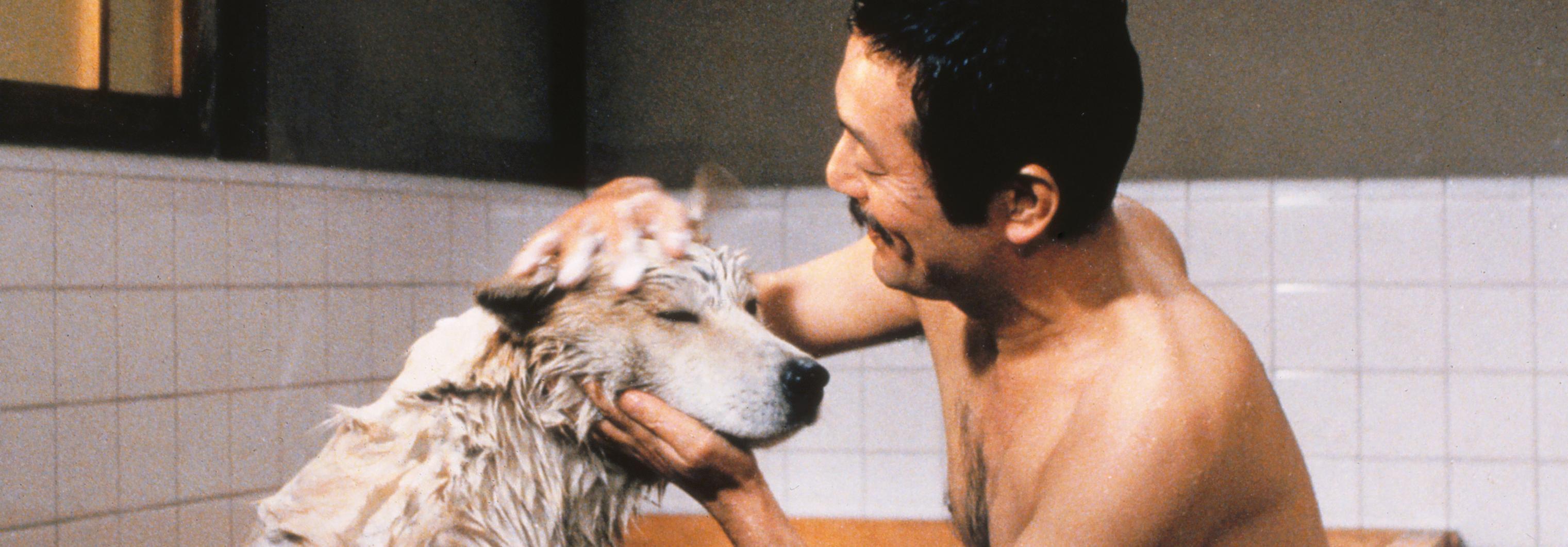 忠犬八公物语-豆瓣9.0的史诗级催泪片,看十次哭十次