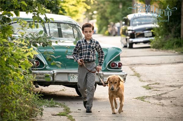 如果狗狗有奥斯卡,本片可提名两个男主两个