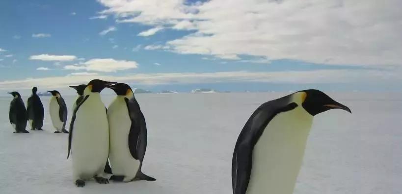 帝企鹅日记2剧照